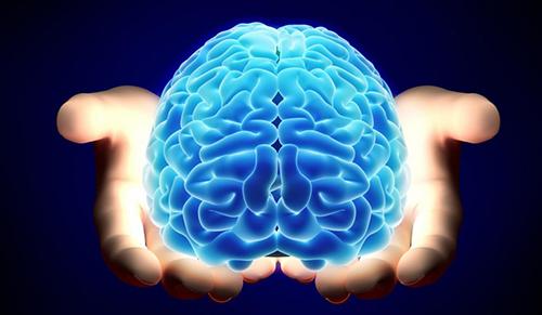 un cerebro entre las manos