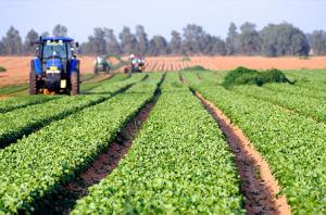 cultivo agrícola