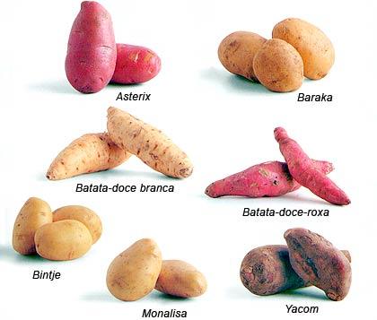 El camote, batata o boniato: Descripción y composición nutricional. (1/3)