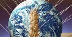 espiga de trigo en el planeta tierra