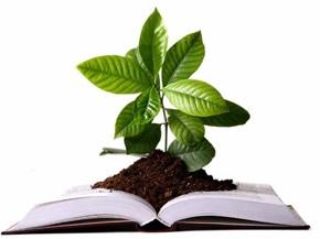 brote de planta sobre un libro