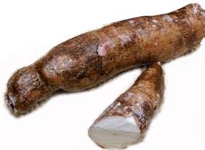 raíz de manihot esculenta