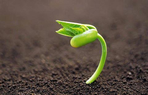 brote de planta en la tierra