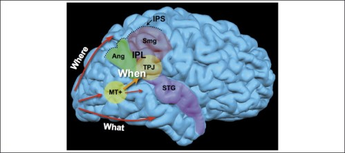 brain cognition