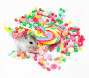 raton comiendo golosinas