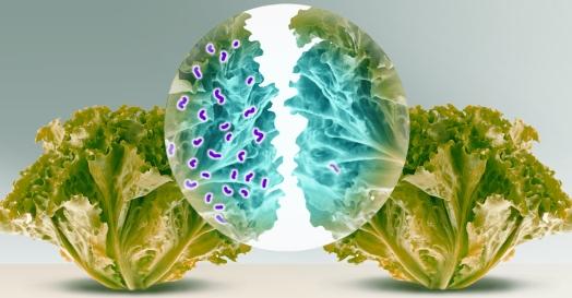 Desinfección de hortalizas, verduras y frutas. (1/2)
