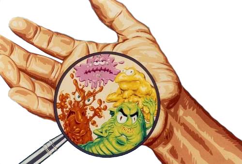 Shigelosis transmitida por alimentos contaminados consejo nutricional - Fuentes de contaminacion de los alimentos ...